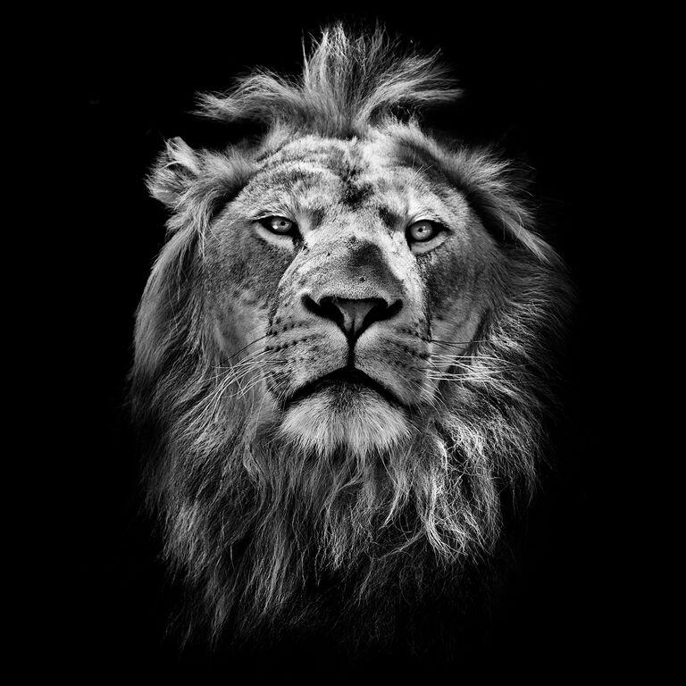 Let them roar